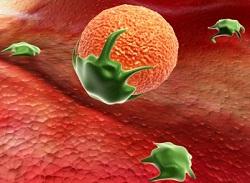 善玉菌の免疫力強化