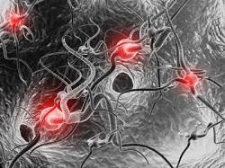 神経伝達物質やニューロン