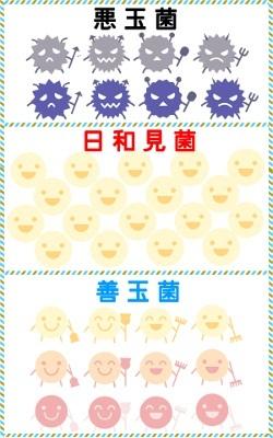 腸内フローラを構成する善玉菌と悪玉菌と日和見菌